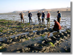 Aquaculture and bay management project marine aquaculture for Tomales bay fishing report