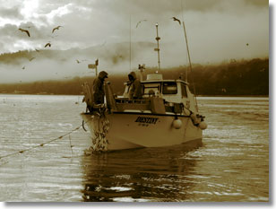 State managed california commercial herring fishery for Tomales bay fishing report