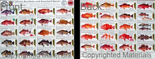 Groundfish central groundfish identification for California saltwater fish species
